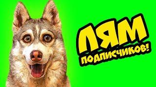 домашнее животное - Pet
